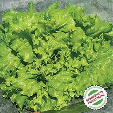 Фото салатов типа афицион