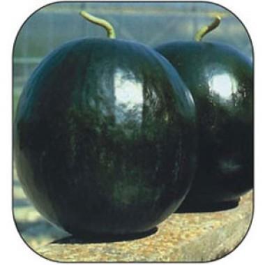 Семена арбузов купить