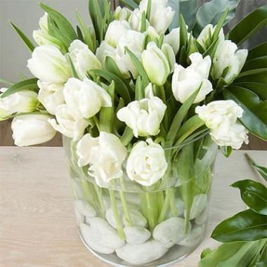 Тюльпан Witte Rebel интернет-магазин