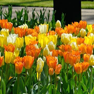 Тюльпаны Imperial Friends Микс интернет-магазин