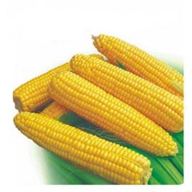 Семена кукурузы купить