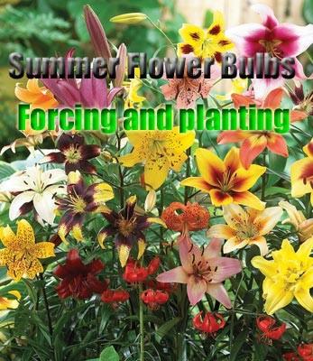 """Книга """"Summer flower bulbs"""" фото"""