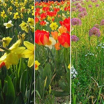 Микс ландшафтный Floriade фото