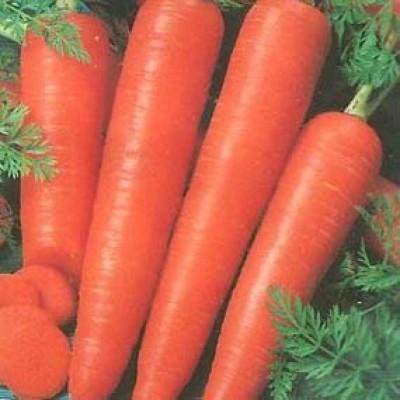 Морковь Олимпус фото