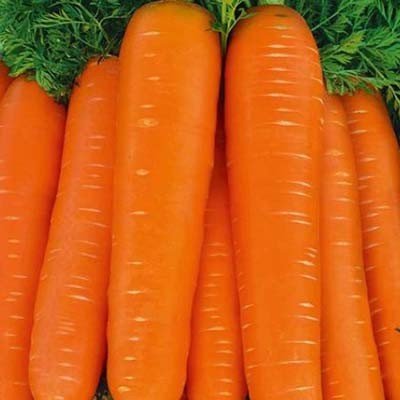 Морковь Тинга фото