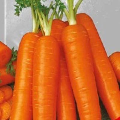 Морковь Перфекция фото