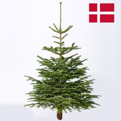 Новогодняя елка Нордман (срезанная) 190-210 см фото