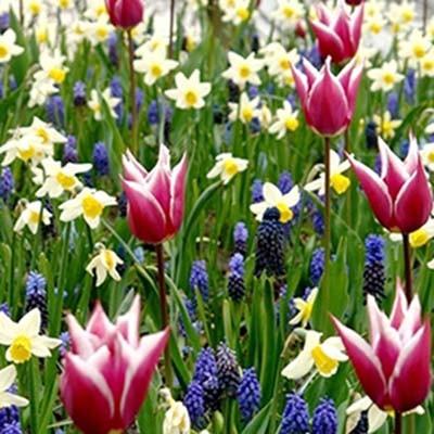 Микс ландшафтный Palette of Spring фото
