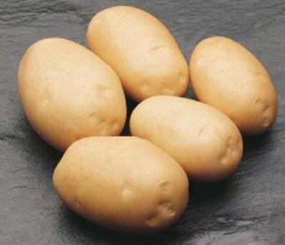 Картофель Derby фото