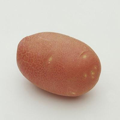 Картофель Ред Скарлет (раннеспелый) фото