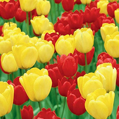 Микс ландшафтный Strong Colours фото