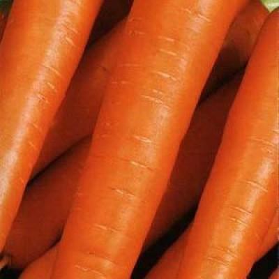 Морковь Цидера фото