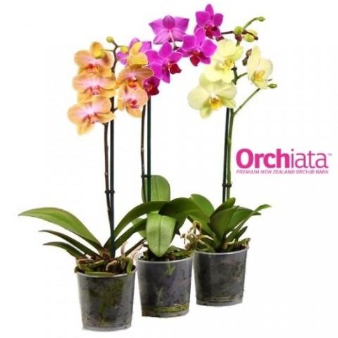 Орхиата Classic 5 л (6-9 mm.) субстрат фото