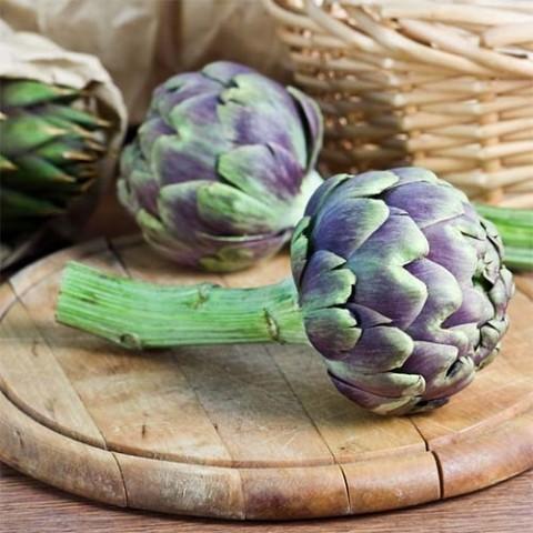 Артишок Римский фиолетовый фото