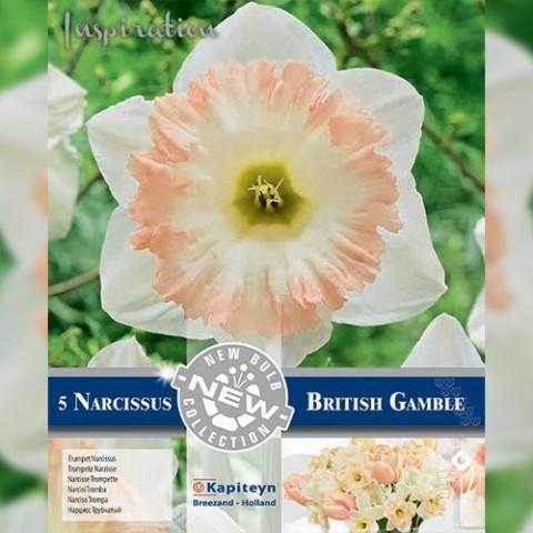 Нарцисс British Gamble (Брендовые луковицы KAPITEYN®) фото