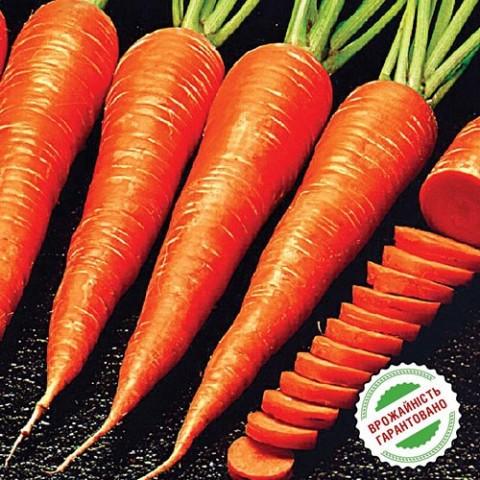 Морковь Каротан фото