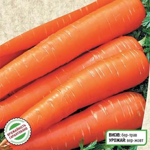 Морковь Осенняя Королева фото
