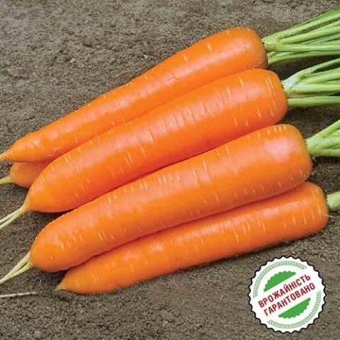 Морковь Монанта фото