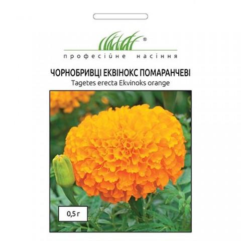 Бархатцы Эквинокс оранжевые фото