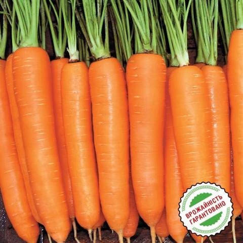 Морковь Колтан F1 фото
