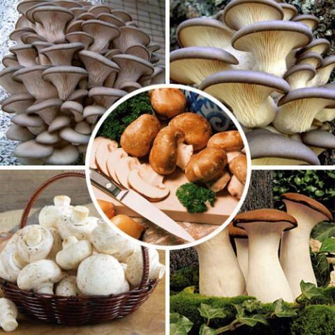 Комплект грибов для выращивания в домашних условиях  фото