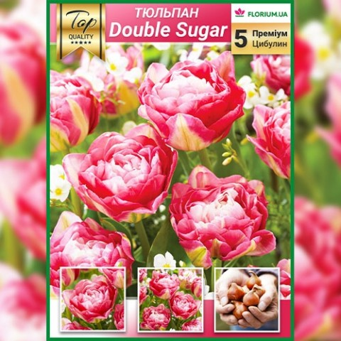 Тюльпаны Double Sugar (Премиум Луковицы) фото