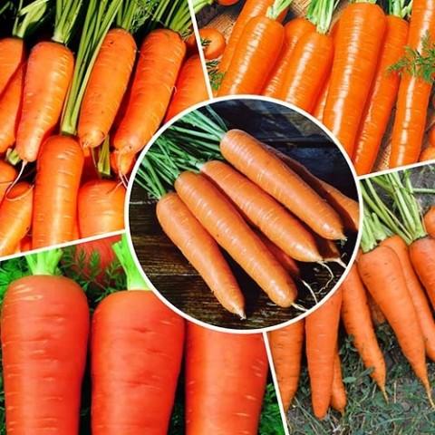 Набор Моркови фото