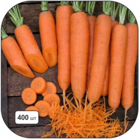 Морковь Елеганс фото