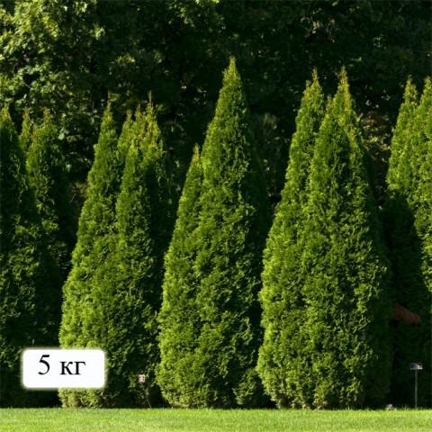 Минеральные удобрения Для туй и хвойных деревьев фото