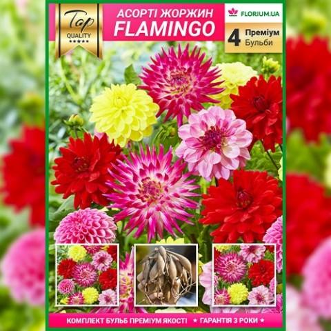 Премиум георгины Flamingo (брендовая упаковка) фото