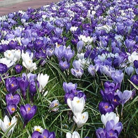 Микс ландшафтный Haarlem фото