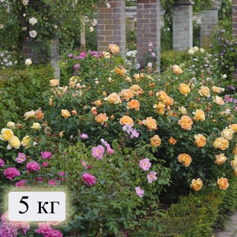 Минеральные удобрения Для роз (на 200 м. кв) фото