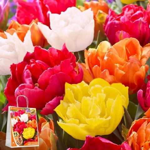 Тюльпаны Мега-Махровые Микс (Премиум Луковицы) фото