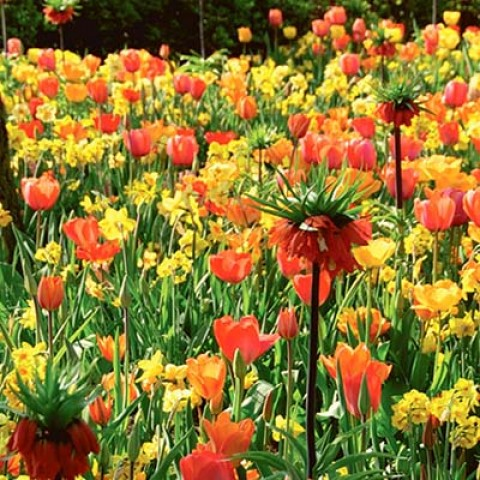 Микс ландшафтный Flower Art фото