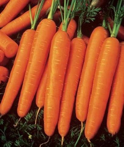 Морковь Ланге Роте Штумпфе фото