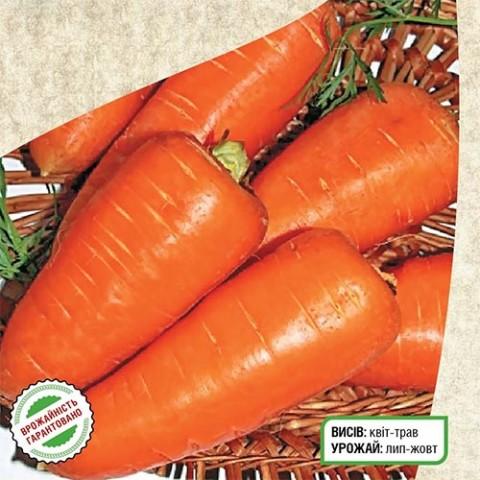 Морковь Шантане Ред Коред фото