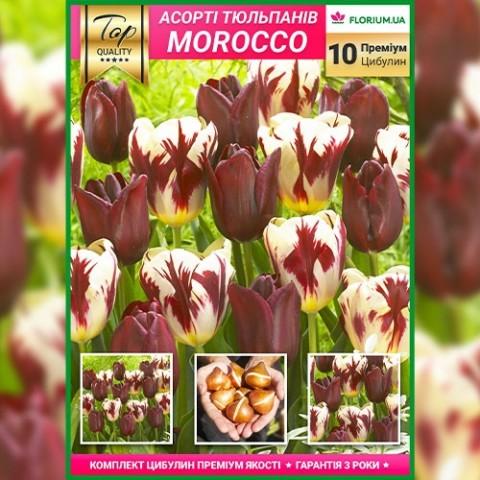 Микс Тюльпанов Марокко (Премиум Луковицы) фото