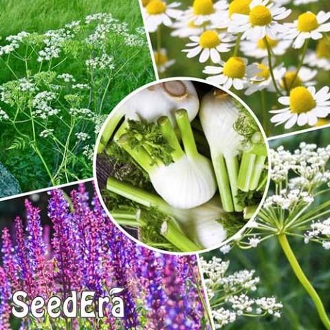 Набор Лекарственные травы Для похудения фото