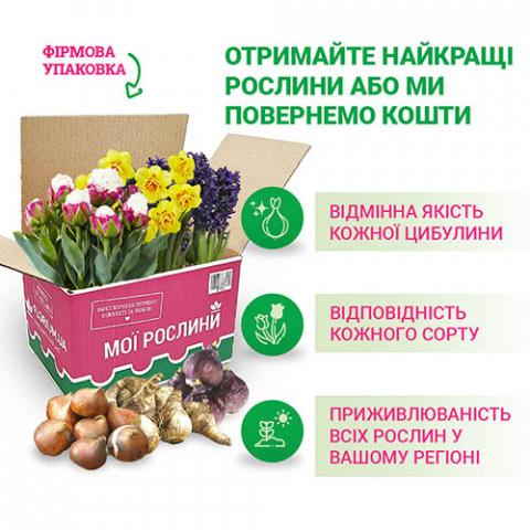 Микс Супермахровые тюльпаны (брендовый пакет) фото