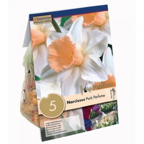 Нарцисс Park Perfume (Брендовые луковицы KAPITEYN®) фото