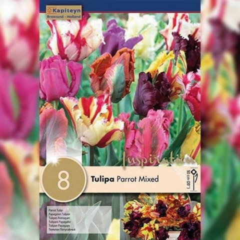 Тюльпан Parrot Mixed (Брендовые луковицы KAPITEYN®) фото