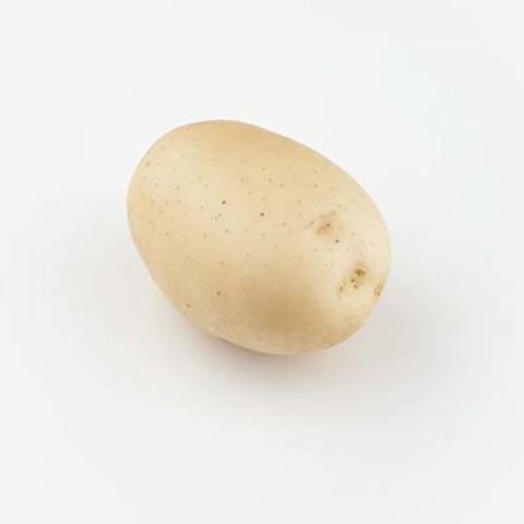 Картофель Эвора фото