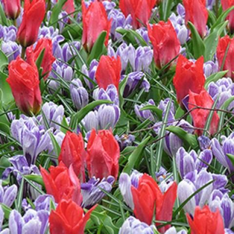 Микс ландшафтный Promise of Spring фото