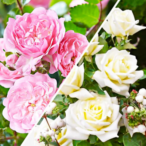 Комплект роз Нежность фото