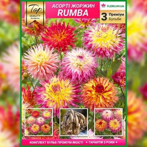 Премиум георгины Rumba (брендовая упаковка) фото