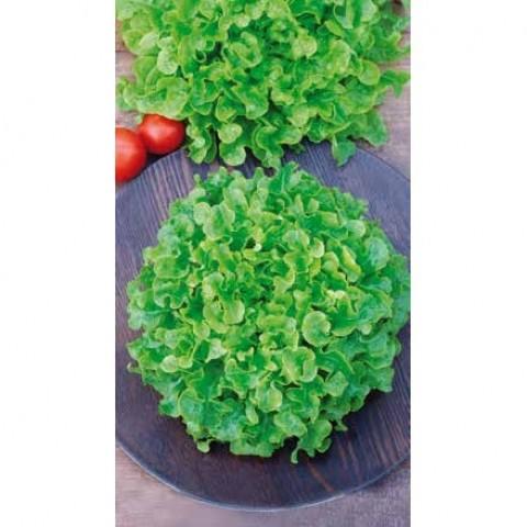 Салат Балконный зеленый фото