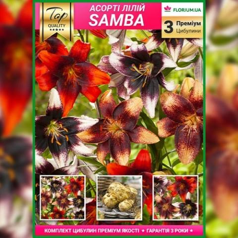 Премиум лилии Samba (брендовая упаковка) фото