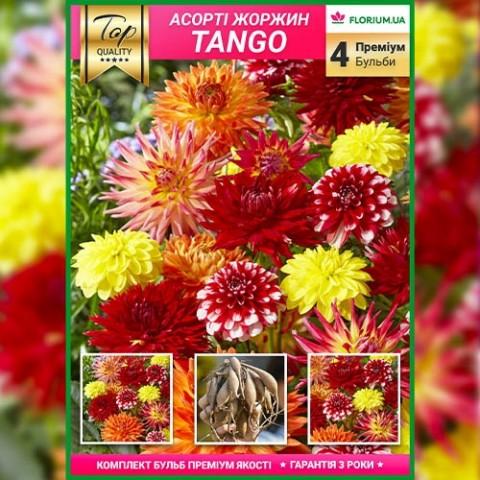 Премиум георгины Tango (брендовая упаковка) фото