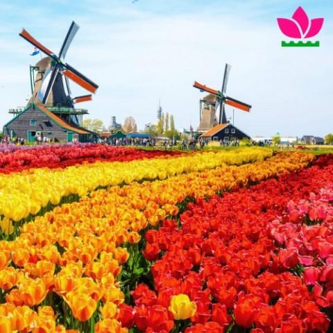 Автобусный тур в Голландию (парк «Койкенхоф») с командой Florium.ua. фото
