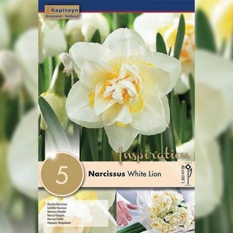 Нарцисс White Lion (Брендовые луковицы KAPITEYN®) фото